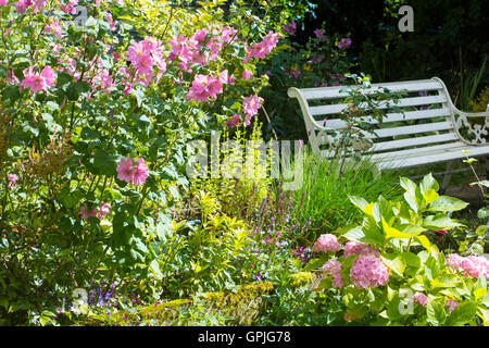 . White old bench and pink Alcea rosea flowers - Stock Photo