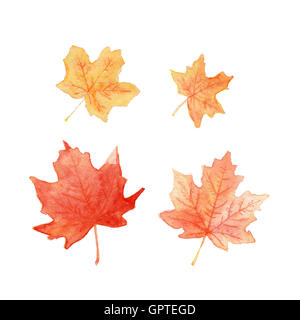 Autumn colored maple leaves set watercolor painting - Stock Photo