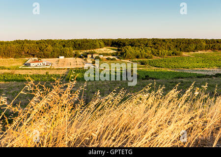 Vineyard house among the vineyards in Bozcaada Island - Stock Photo