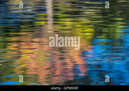 Colorful fall leaves are reflected on the surface of a pond. - Stock Photo