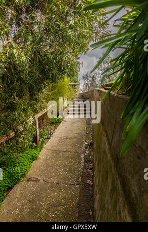 Concrete pathway in the shade of overgrown shrubs leading up to an open and bright area