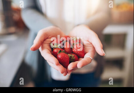 Cropped image a woman's hands holding a bunch of strawberries. Female holding a handful of fresh strawberries. - Stock Photo