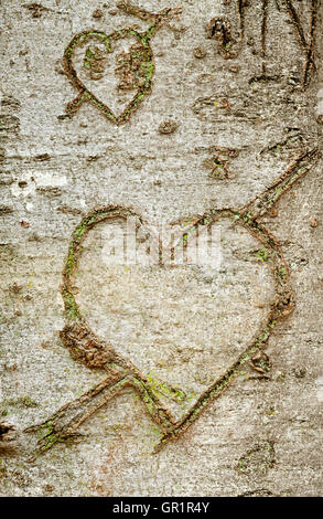 Close up view of heart shape carved in the tree bark. - Stock Photo