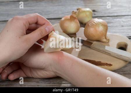 Zwiebel hilft bei Insektenstich, Mückenstich, Mückenstiche, Zwiebelhälfte wird auf die juckende Hautstelle gelegt, Zwiebelauflag