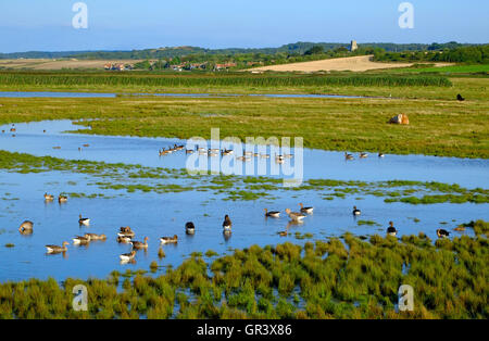 cley nature reserve looking towards salthouse, north norfolk, england - Stock Photo