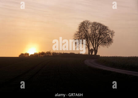 Aesculus Hippocastanum, Common Horse Chestnut With Evening Sky In Winter, Bad Iburg-Glane, Lower Saxony, Germany - Stock Photo