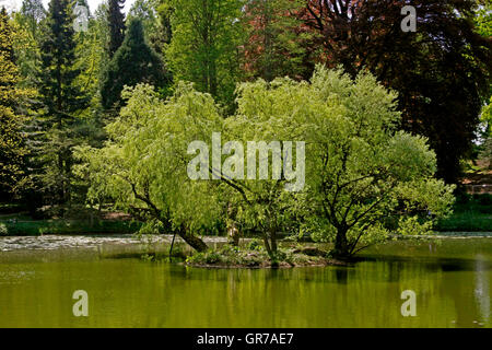 Pond Landscape With Willows In Spring, North Rhine-Westphalia, Germany, Europe - Stock Photo