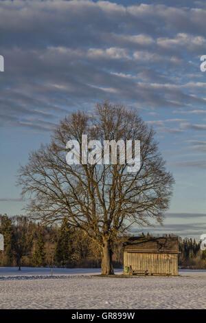 Eine Idyllische Moorlandschaft Im Voralpenland Bei Bad Tölz - Stock Photo