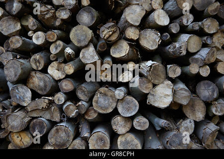 Tree Trunks Stacked In The Forest - Stock Photo