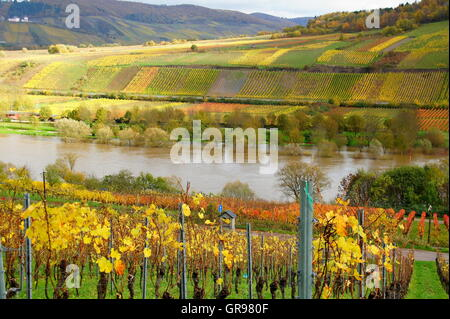 Autumn In The Vineyards Near Reil On The Moselle - Stock Photo