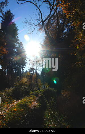 Road In Autumn Forest With The Baking Sun - Stock Photo