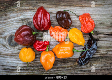Hot Chillies on a textured wood background - Stock Photo
