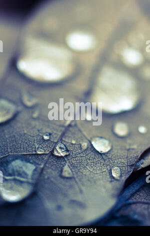 Autumnal Oak Leaf - Stock Photo