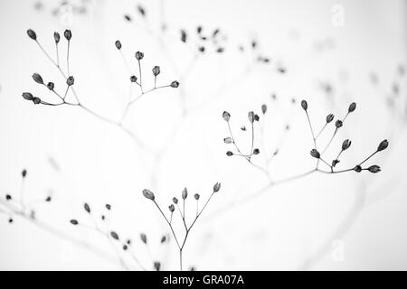 Artistic Black And White Photo Of A Dried Plant - Stock Photo