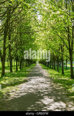 Baille-Maille Lime Avenue In Himmelkron View From West To East - Stock Photo