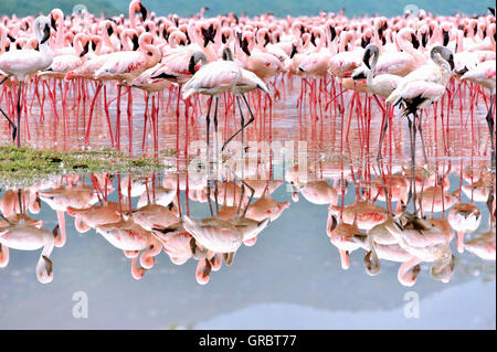 Flamingos In The Mirror Of Salty Water In The Rift Valley - Stock Photo