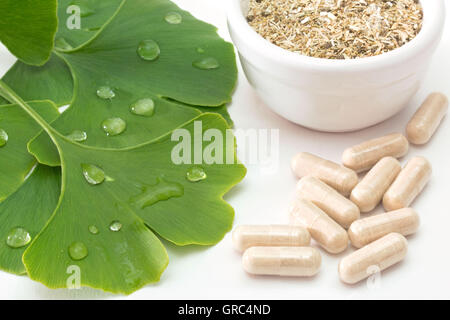 Fresh Ginkgo Leaves With Dried Herb And Capsules On White Background - Stock Photo