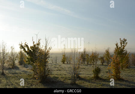 Morning Idyll In Rhinehesse, Germany, With Hoarfrost And Morning-Fog - Stock Photo