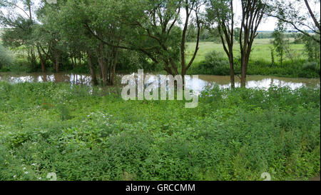 Itz In Itzgrund At High Watermark, Upper Franconia, In The Rainy Early Summer 2016 - Stock Photo