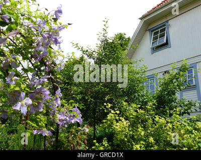 Detached House With Garden - Stock Photo