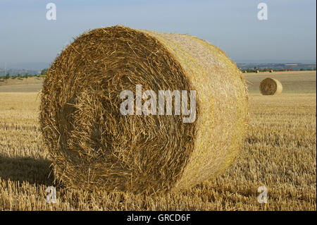Straw Bales On Harvested Cornfield - Stock Photo