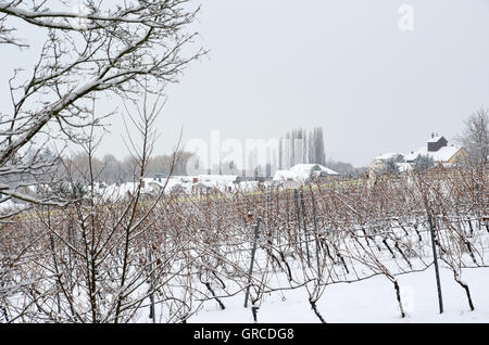 Winegrowing Area Rhinehesse In Winter - Stock Photo