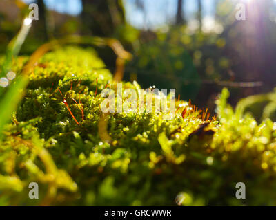 Close-Up Of Forest Soil, Moss In The Sunshine - Stock Photo