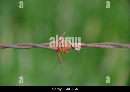 Barbed Wire Fence In Front Of Green Background - Stock Photo