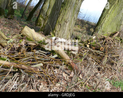 For A Fence, A Wall, Piled Branches And Twigs On The Forest Edge, Brushwood Fence - Stock Photo