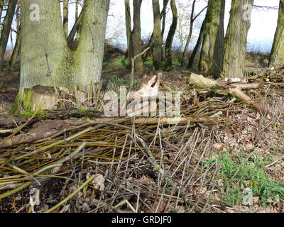 For A Fence, A Wall Piled Branches And Twigs On The Forest Edge, Brushwood Fence - Stock Photo