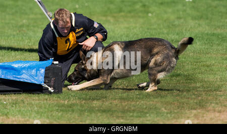 Langenau, Germany. 07th Sep, 2016. Czech police officer Ladislav Sedivec (Karlovy Vary) and his German shepherd - Stock Photo