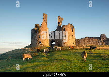 Early morning by the ruins of Dunstanburgh Castle on the coast of Northumberland, England UK - Stock Photo