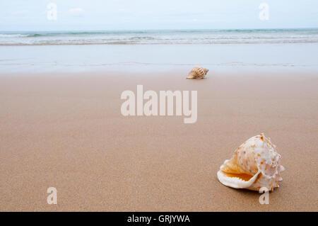 Shells on seashore. - Stock Photo
