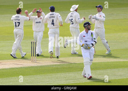Essex players celebrate the wicket of Mark Turner - Essex CCC vs Derbyshire CCC - LV County Championship Division - Stock Photo