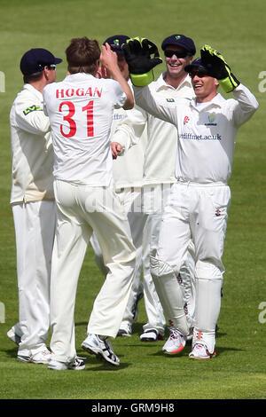 Glamorgan players celebrate the wicket of Mark Pettini - Glamorgan CCC vs Essex CCC - LV County Championship Division - Stock Photo