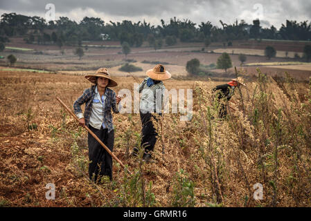 Young female farmers working in a field - Stock Photo