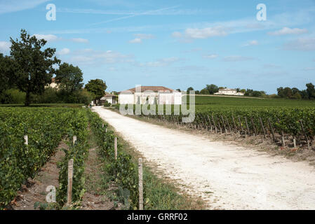Pauillac wine region France - Chateau Haut Bages Liberal the vines and vineyard in Pauillac a wine producing area - Stock Photo