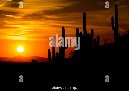 Saguaro cactus silhouetted against a setting sun near the Tortilla Mountains of southern Arizona. - Stock Photo