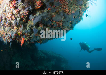 Overhang with purple coloured soft corals at Kuda Rah Thila - Stock Photo