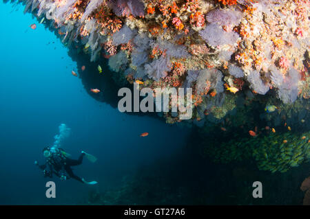 Photographer diving along an overhang with colourful soft corals at Kuda Rah Thila - Stock Photo