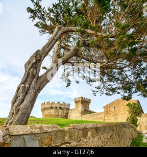 Pine tree in Populonia medieval village landmark, city walls and fort tower on background. Tuscany, Italy. - Stock Photo