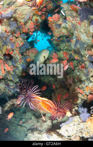 Small opening through a reef wall with colourful marine life. - Stock Photo