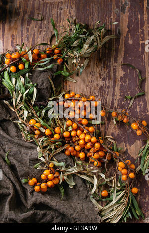 Sea buckthorn on a branch - Stock Photo