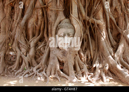 The Head of sandstone Buddha in tree roots at Wat Mahathat, Ayutthaya, Thailand - Stock Photo