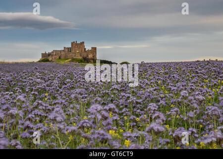 bamburgh, castle, northumberland, sea, coast, sand, england, beach, architecture, uk, dunes, ancient, landscape, north, outdoors Stock Photo