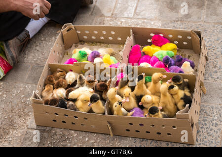Chicks and ducks for sale on the sidewalk in Yazd, Iran Stock Photo ...