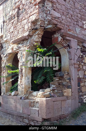 Plants grown inside the old church ruins - Stock Photo