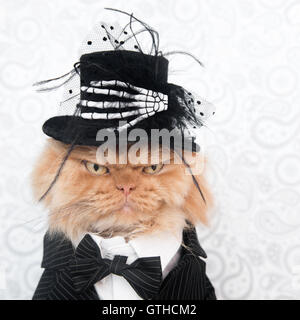 Persian cat with Halloween costume looking at camera - Stock Photo