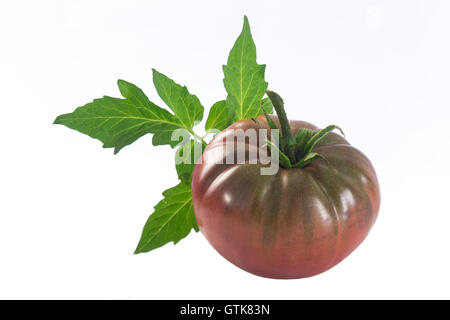 an isolated dark red heirloom tomato with leaf - Stock Photo