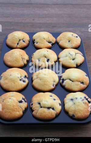 Blueberry muffins in tin - Stock Photo